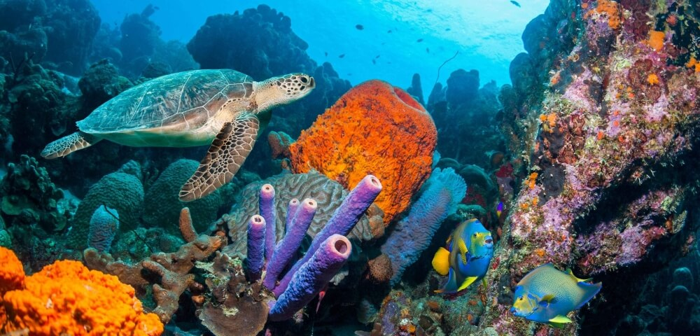 Komodo Island_snorkeling