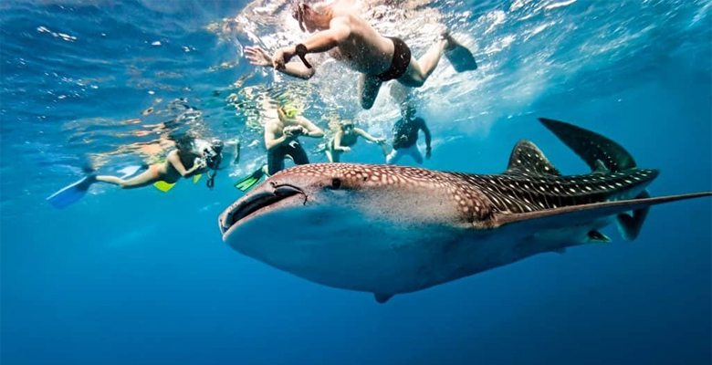 Palawan Philippines snorkeling