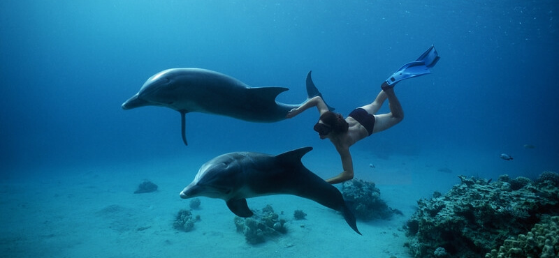 Swimming-with-Dolphins in safaga